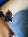 Kotki Słupsk - zdjęcie 8