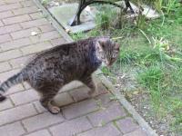 Kot do adopcji Sosnowiec - zdjęcie 2
