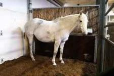 Ściółka dla koni-torfowa. Dostawa w cenie cały kraj Bemowo - zdjęcie 1