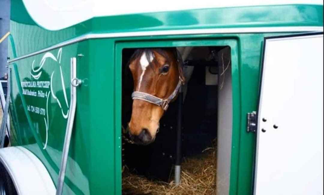 Wypożyczalnia przyczep, przyczepa do przewozu koni, przewóz koni Kalisz - zdjęcie 1
