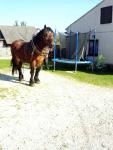 Sprzedam konia Kielce - zdjęcie 4