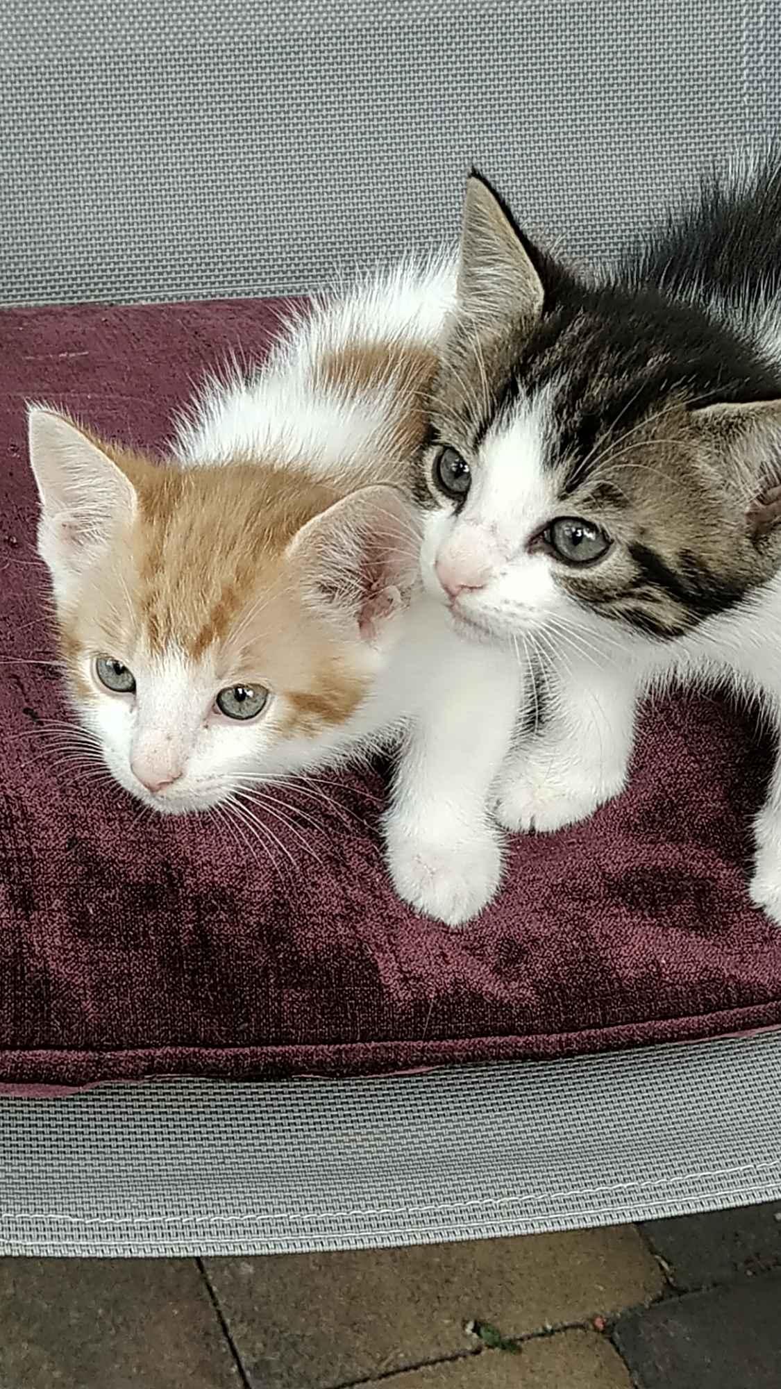Oddam kotki Mrągowo - zdjęcie 1