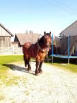 Sprzedam konia Kielce - zdjęcie 3