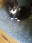 Kotki Słupsk - zdjęcie 4