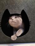 Domek dla kota 38x38x35 Ostrowiec Świętokrzyski - zdjęcie 1