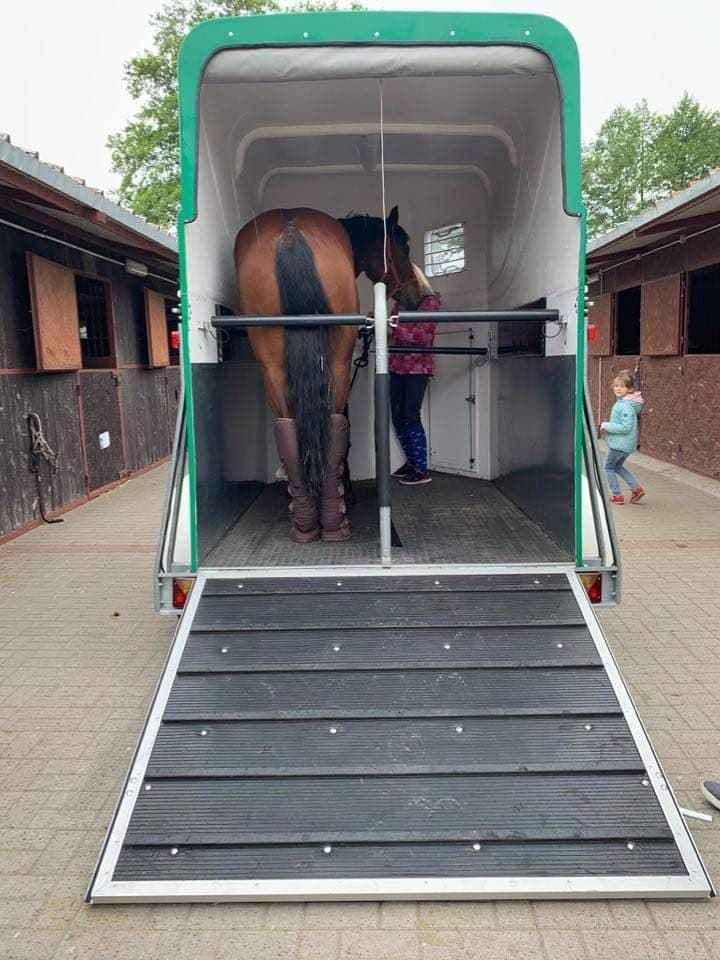 Wypożyczalnia przyczep, przyczepa do przewozu koni, przewóz koni Kalisz - zdjęcie 2