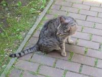 Kot do adopcji Sosnowiec - zdjęcie 3