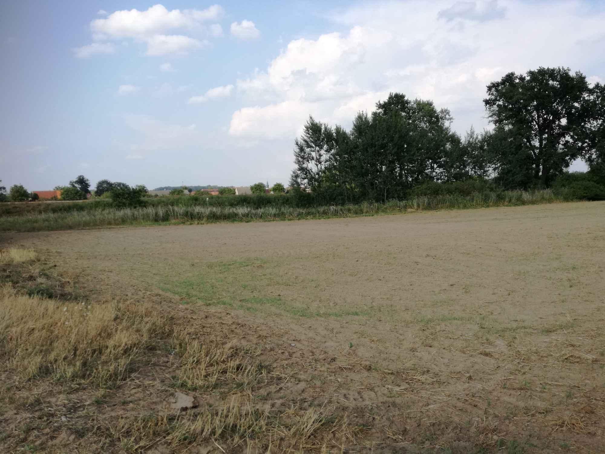 Działka rolna 2,58 ha + łąka 0.89 ha Krosno Odrzańskie - zdjęcie 4