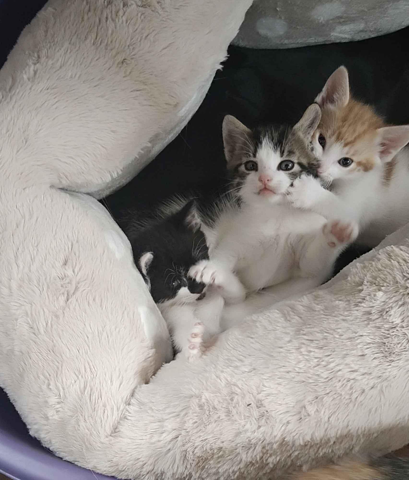 Oddam kotki Mrągowo - zdjęcie 3