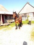 Sprzedam konia Kielce - zdjęcie 1