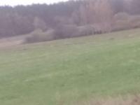 Działkę rolną ziemia sprzedam 12000 m2 Gardna Wielka - zdjęcie 1