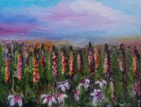 Kwiaty polne – Łubin Szczecin - zdjęcie 1