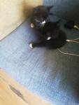 Kotki Słupsk - zdjęcie 1