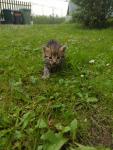 Oddam małe kotki Pszów - zdjęcie 2