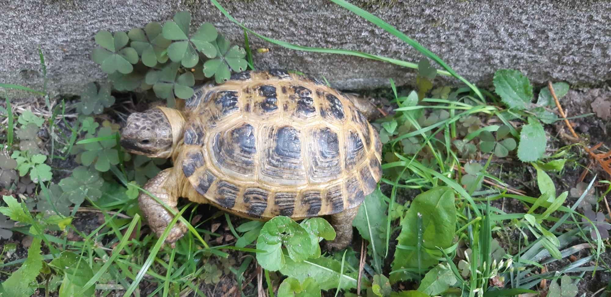 Żółw Bełchatów - zdjęcie 3