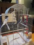 Papugi Nimfy Para Nowa Huta - zdjęcie 1