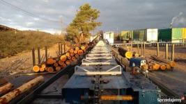 Linia sortowania drewna Gorzów Wielkopolski - zdjęcie 2