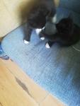 Kotki Słupsk - zdjęcie 2