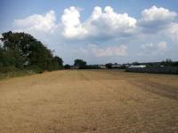 Działka rolna 2,58 ha + łąka 0.89 ha Krosno Odrzańskie - zdjęcie 2