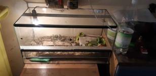 Żółw Bełchatów - zdjęcie 6