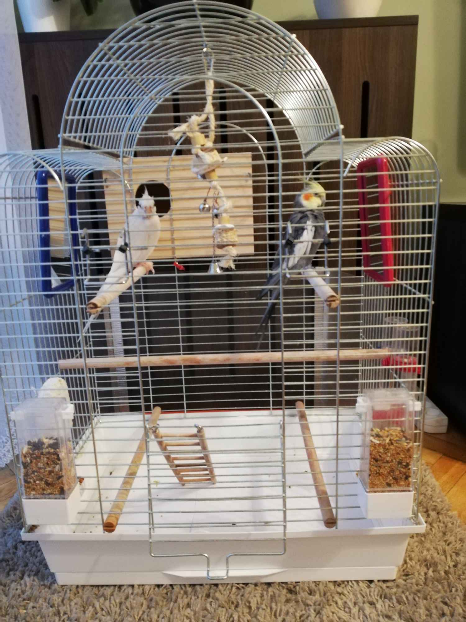 Papugi Nimfy Para Nowa Huta - zdjęcie 4