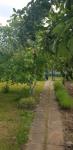 Ogródek działkowy ROD Fabryczna - zdjęcie 2