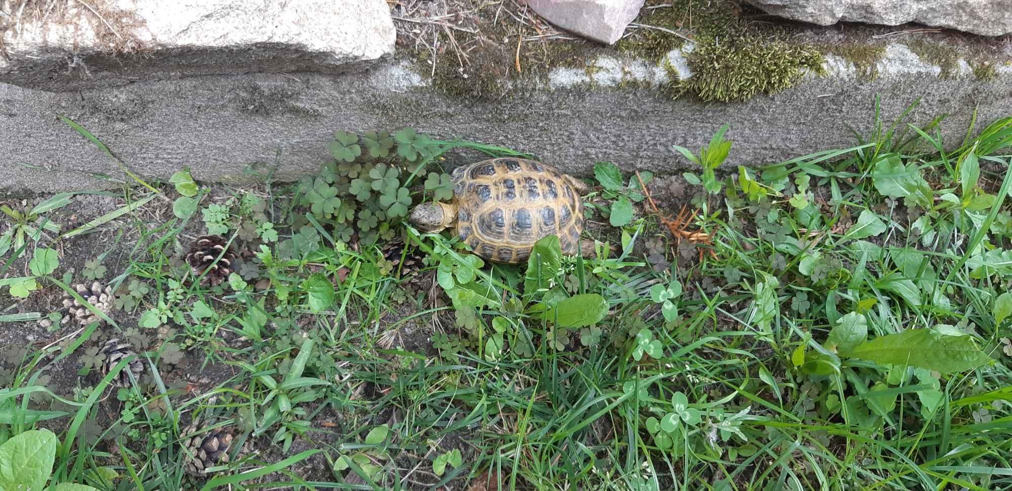 Żółw Bełchatów - zdjęcie 4