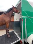 Wypożyczalnia przyczep, przyczepa do przewozu koni, przewóz koni Kalisz - zdjęcie 3