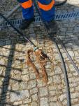wywóz szamba odtykanie  rur kanalizacji KingKan WOŁOMIN787342182 Wołomin - zdjęcie 7