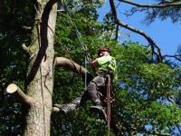 Wycinka i pielęgnacja drzew Gdańsk Gdańsk - zdjęcie 3