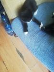 Kotki Słupsk - zdjęcie 3