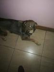 Oddam w dobre ręce psa Wysoka - zdjęcie 2