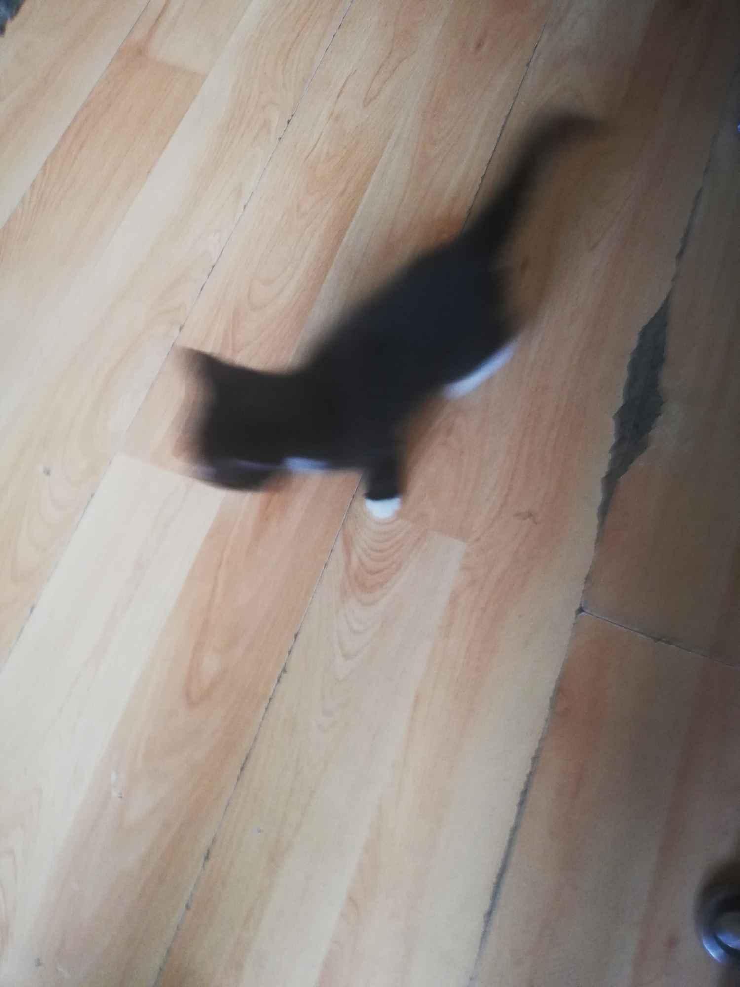 Kotki Słupsk - zdjęcie 6