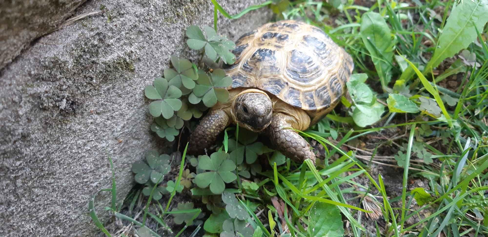 Żółw Bełchatów - zdjęcie 1