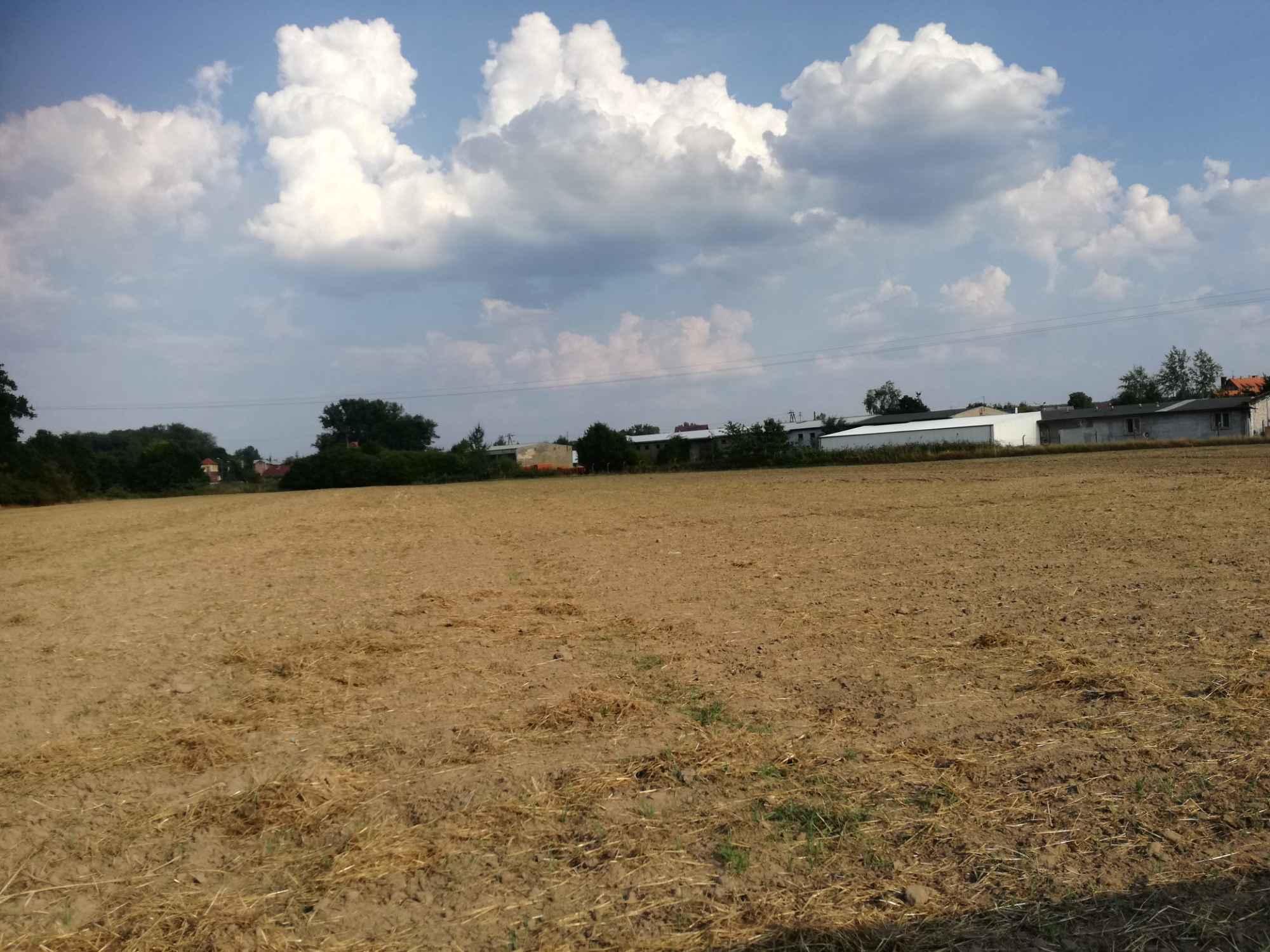 Działka rolna 2,58 ha + łąka 0.89 ha Krosno Odrzańskie - zdjęcie 5