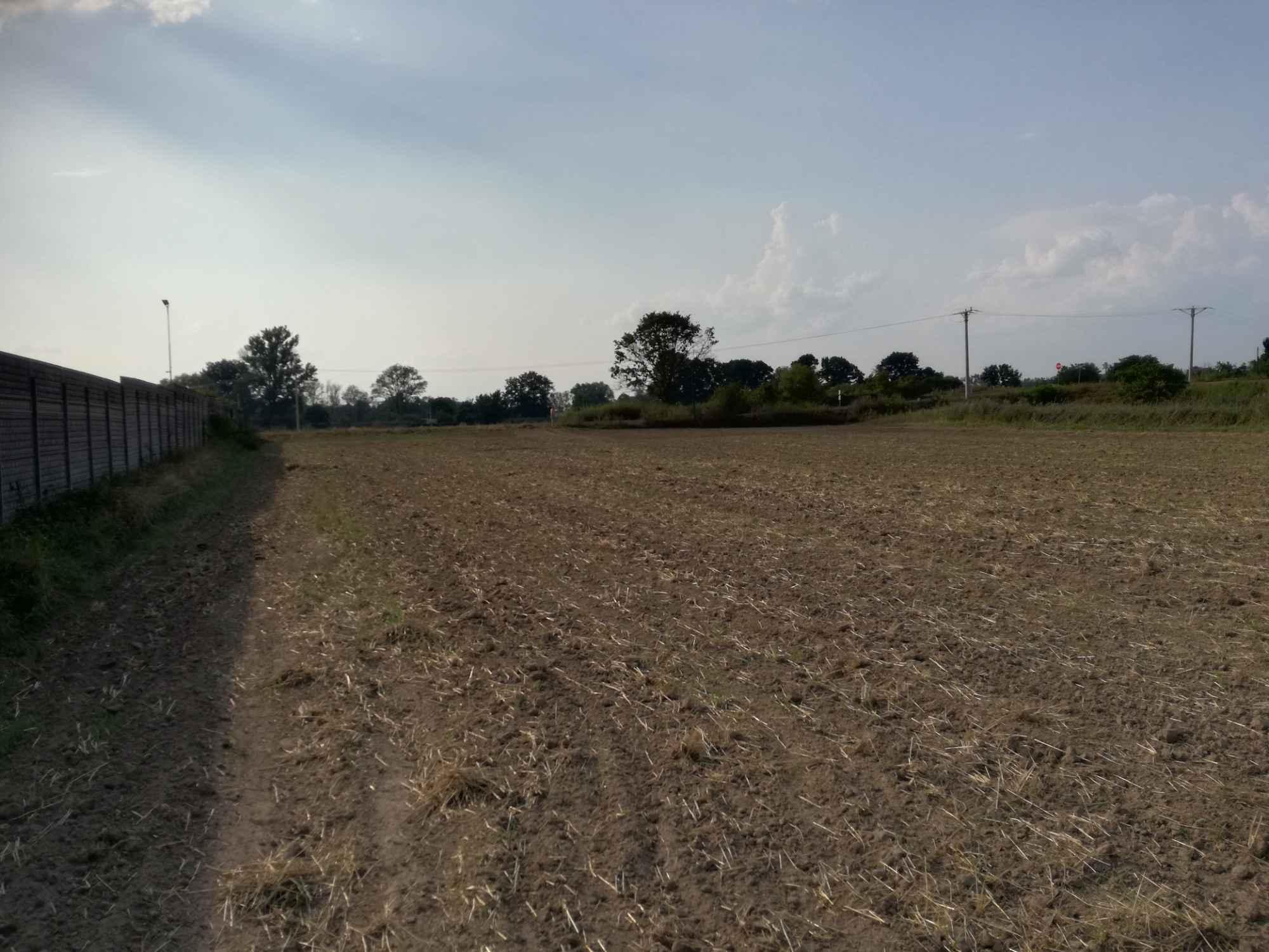 Działka rolna 2,58 ha + łąka 0.89 ha Krosno Odrzańskie - zdjęcie 6
