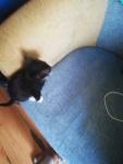 Kotki Słupsk - zdjęcie 9