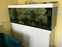 Sprzedam akwarium Niepołomice - zdjęcie 1