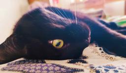 Opieka nad psem / kotem Targówek - zdjęcie 1