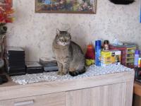 Kot do adopcji Sosnowiec - zdjęcie 1