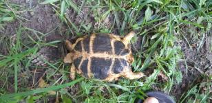 Żółw Bełchatów - zdjęcie 2