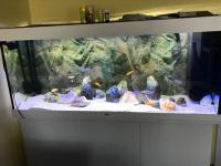 Sprzedam akwarium Niepołomice - zdjęcie 2