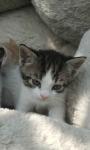 Oddam kotki Mrągowo - zdjęcie 5