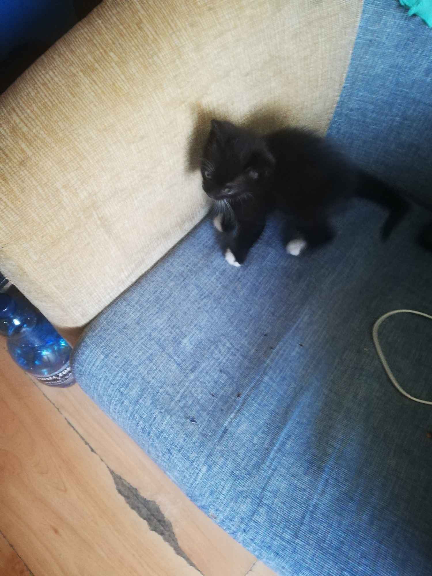 Kotki Słupsk - zdjęcie 7