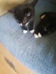 Kotki Słupsk - zdjęcie 5